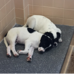 Introverts at the Shelter: Exhausted by Humanity? Spend a day with shelter dogs!